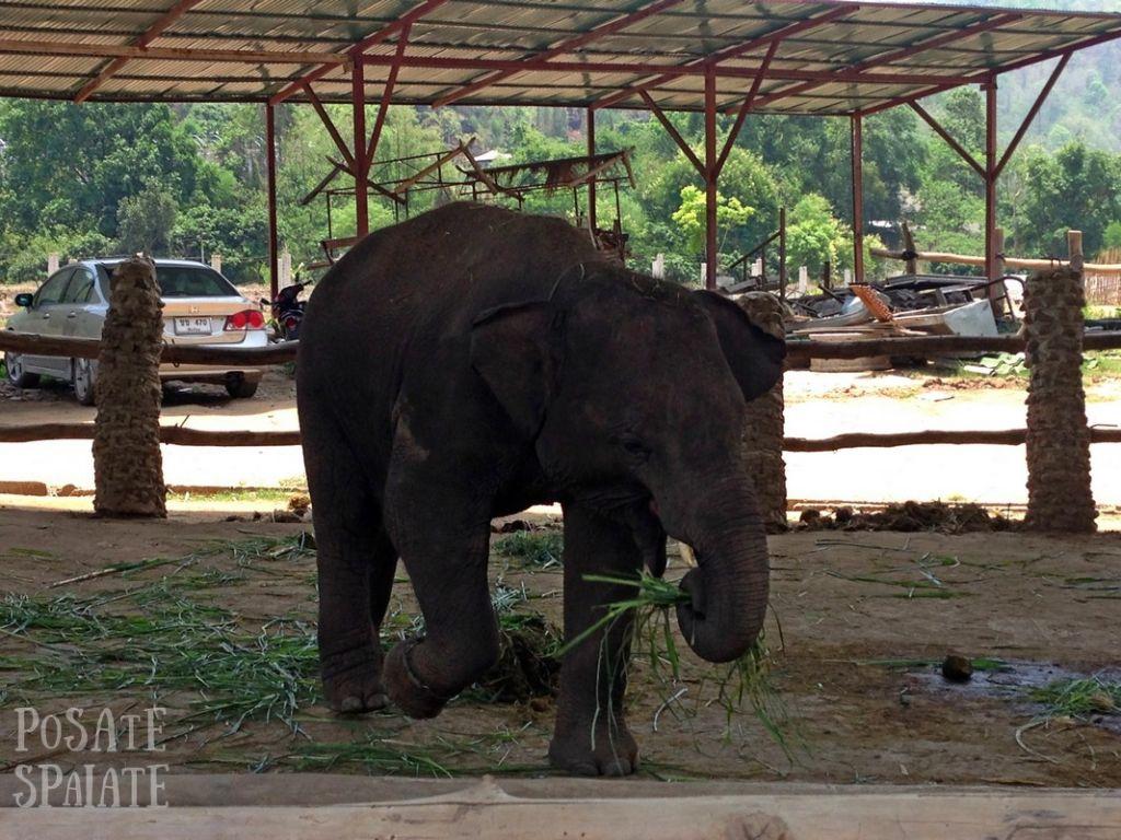 Thailand 2015-05-05 00617