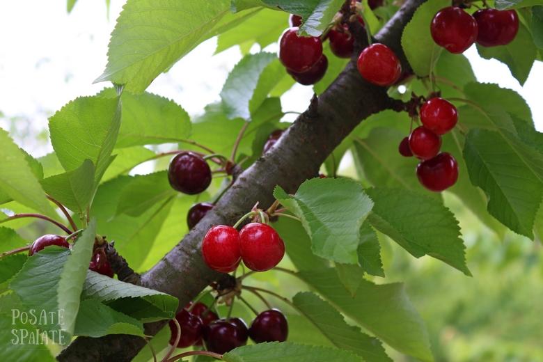 Cherry Festival: di ciliegie e racconti.