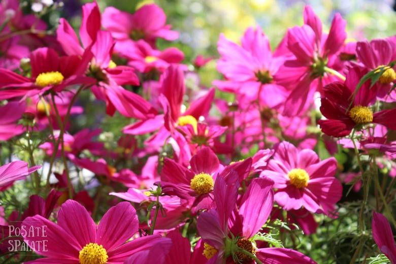 Flor il più grande giardino di torino_Posate spaiate