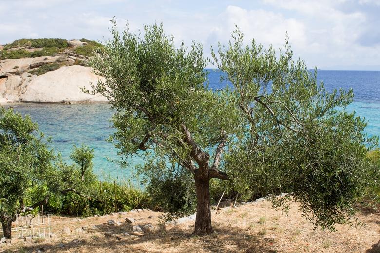 Isola del Giglio_Posate Spaiate