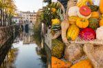Mantova: foglie gialle, mostarda e tortelli di zucca