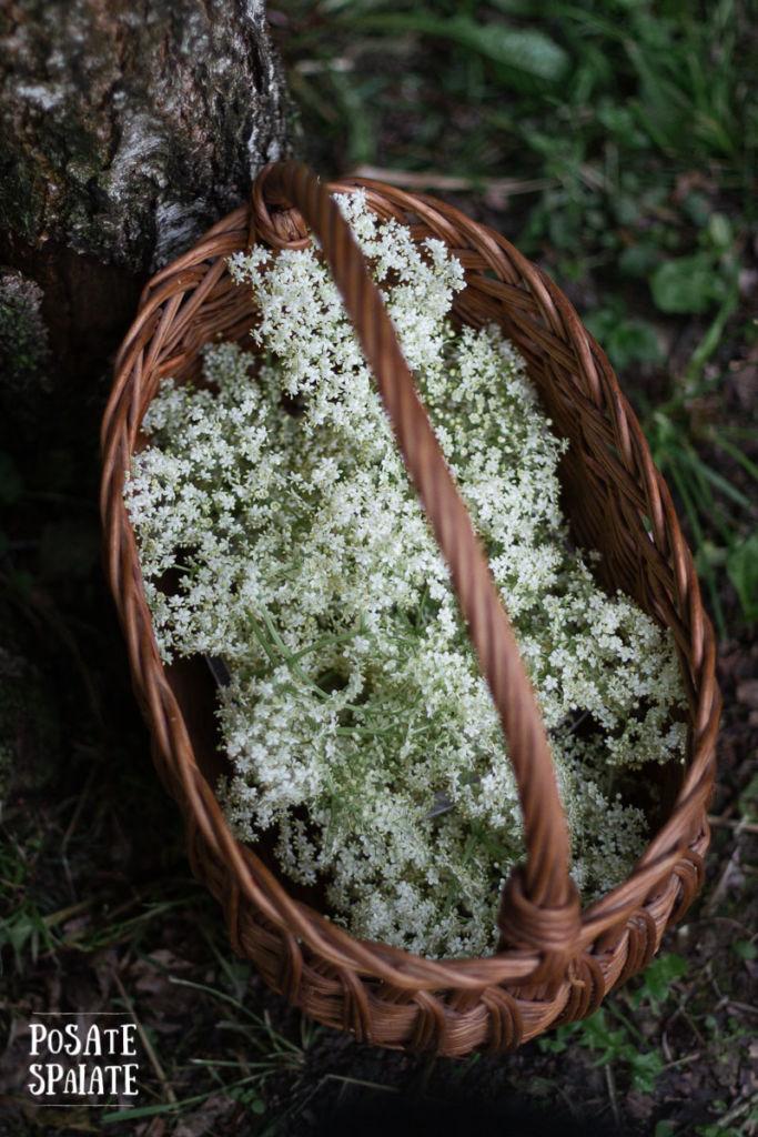 fiori di sambuco